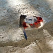 Bilder fra dyreparken Mundomar/Photos from the zoo in Mundomar. Foto: Silje Karin Storvig