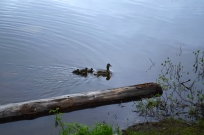 Dyreliv i vannet- både voksne og barn/Wildlife in the water - both adults and kids.