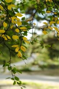 Høstfarger/Autumnal colours. Foto: Marta Øgaard