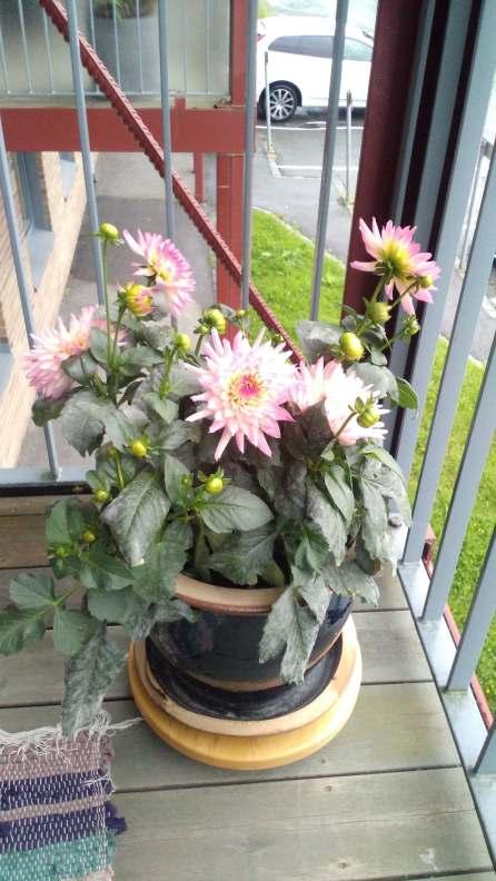 Superduper blomsterbilde