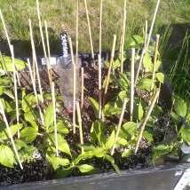 Urtehagen / The herb garden